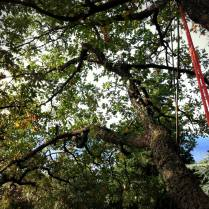 tree climbing Udine