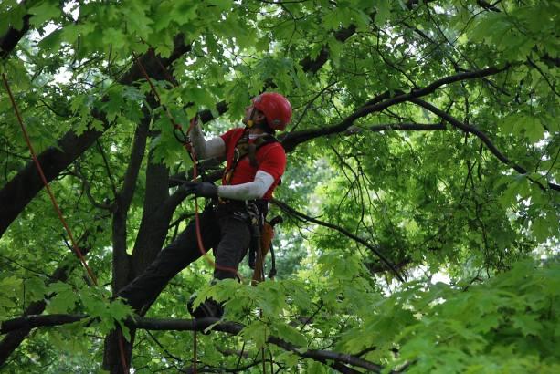 potature e abbattimenti in tree climbing Udine Green Evolution