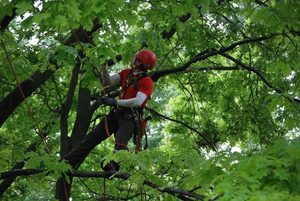 potature e abbattimenti in tree climbing Udine Green Evolution