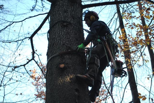 tree-climbing-udine